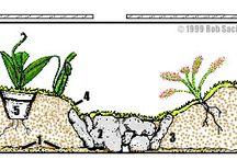 tanaman carnivora