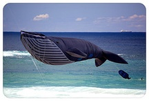 Bondi Festivals / Events, Festivals, Exhibitions, Workshops & Other Happenings at Bondi Beach