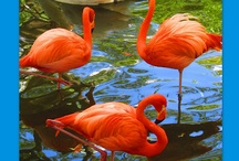 """Fun Flamingo (Song) / """"Pretty pink flamingo, pink from head to toe. Pretty pink flamingo -- pink is all you know."""" / by Debbie Clement"""