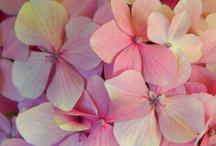 Flower inspiration / a little hobby!