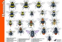 Bijen en zonnebloemen