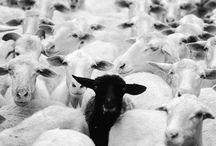Sheep-my Love ❤
