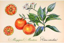 Botanic illustrations / Botanic illustrations postcards
