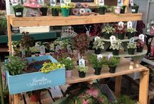 Fairy Gardens / Some Fairy Gardening accessories at Winterberry