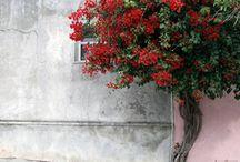 buenos aires / by Jennifer Gordon