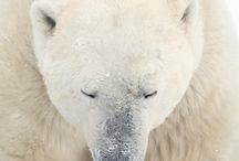 amazing animals / by luxury and opulence
