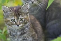 Cats / Cute and lovely cats