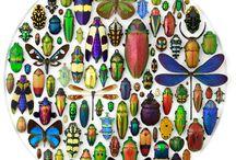 Year 7 bugs