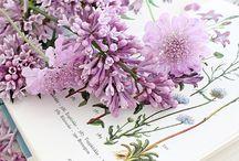 Colours - Lavender