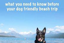 > Dog Safety & Health