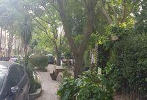 Streetscene and Street Trees