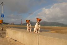 San Francisco with my Pup