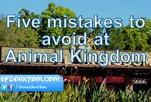 Disney World Animal Kingdom / A compilation of tips for your visit to Animal Kingdom in Walt Disney World.