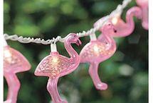 Flamingos and Camp Sites
