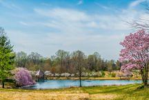 Meadowlark Botanical Gardens / Images of Meadowlark throughout the seasons. http://dcgardens.com/meadowlark/