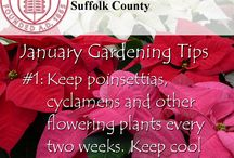 January Gardening Tips / Tips from our master gardeners to keep your garden looking it's best year round.
