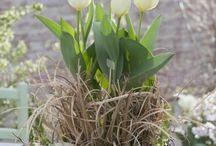 Deko ideen & Blumen