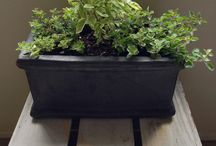 Growing Herbs, Indoors & Outdoors / Growing herbs in garden beds or containers outdoors, or in containers indoors