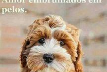 Cachorros♡