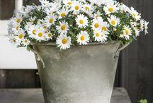 ozdobné kvetiny