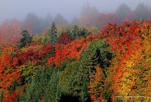 Autumn Beauty / The colours of autumn in the northern hemisphere / by Pat Mestern