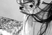 ☽ Deer in Art ☾ / sensitive prey, easy to catch