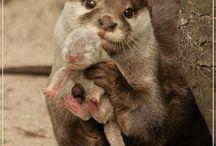 Ottertjes / Alle schattige otters hier!