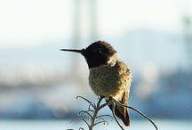 Amazing photos taken in Coronado. / by Visit Coronado
