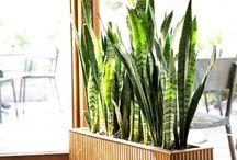 Inside greenery