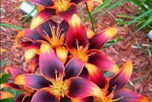 Kwiaty fantazyjnie