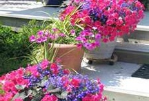 Forcing myself to enjoy gardening this summer