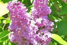 FLOWERS / by Bonnie Tighe