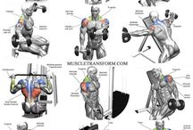 Workouts - anatomy