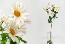 Ромашки, подсолнухи, маки.  Daisies, sunflowers, poppies. / Цветы искусственные - Садовые цветы декоративные-розы, орхидеи, лилии.