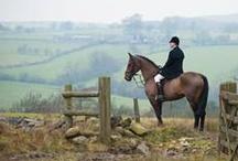 Inspiring horse photos