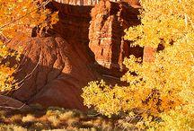Beautiful Places / by Carol Paulson Preece