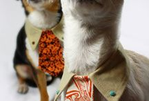 Pets In Threads / A snapshot of our awesome dog clothes & costumes!