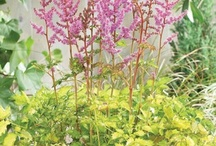 My Garden Plants