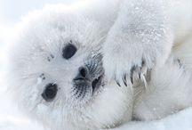 Sea Lions / Otters / Seals