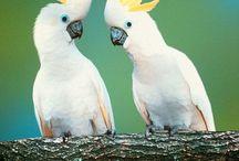 Parrots Wild