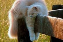 gatos / belleza gatuna