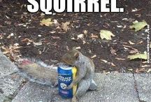 squirrel / by Kimberly Townsend
