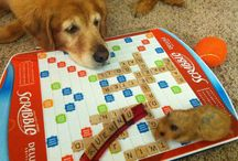 family pets to love / by Alison Shaffer (kitchentable4.com)