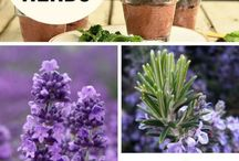Herbs (Cooking with them)