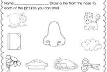 5 senses preschool
