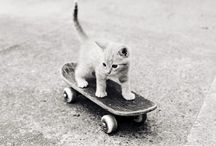 OMG kittens / by zentified