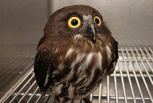 Owl / by Patty