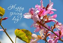 Happy Spring Day / Come celebrate Spring in style at the Hamilton Boutique Hotel