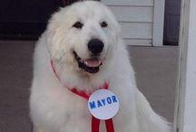Le nostre campagne: #elezioni2016 #city4dogs / Oltre 1370 comuni al voto a giugno 2016: ma cosa hanno in programma i candidati sindaco per città più a misura di cane? qualazampa.news parte in ricognizione