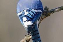 vogels, birds / by Marianne Temming